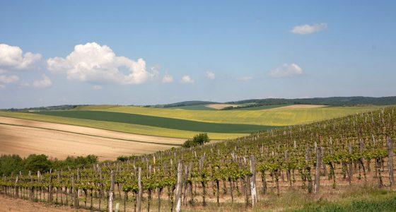 Baumgartner Weinviertler Landschaft Im Frühling